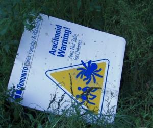 Beware of Spiders